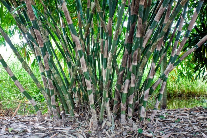 Parliament Passes Bill Amending Forest Act Bamboo Not A